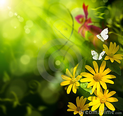 Art summer background. Flower and butterfly
