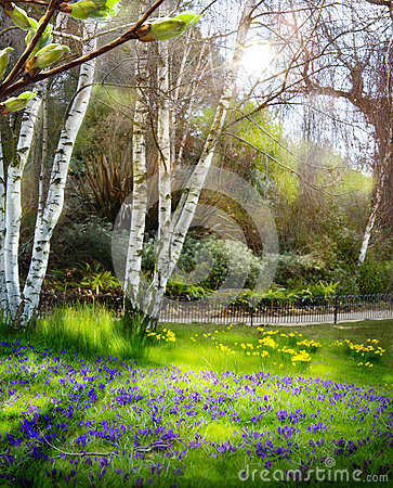Art Sunlight in the green forest, spring time