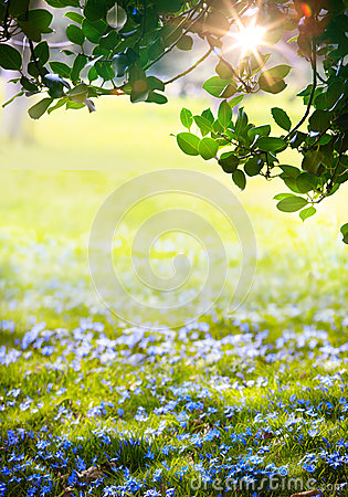 Free Art Sunlight In The Green Easter Forest, Spring Time Royalty Free Stock Images - 37140329