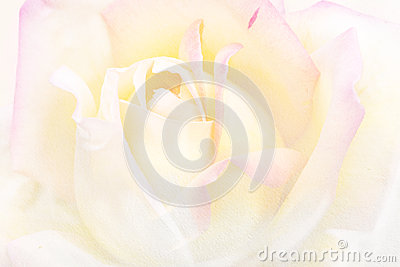 Art vintage background rose flower watercolor