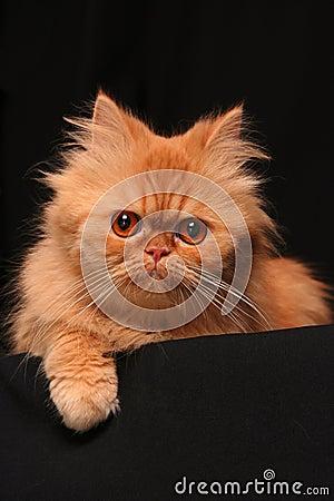 Free Artful Cat Royalty Free Stock Image - 2084626