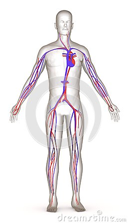 Artificial character with circulatory system