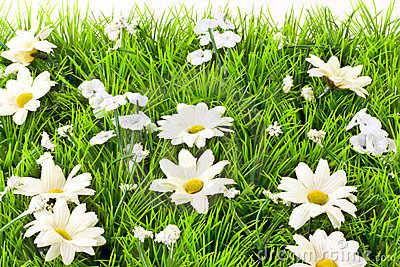 artificial grass and daisies