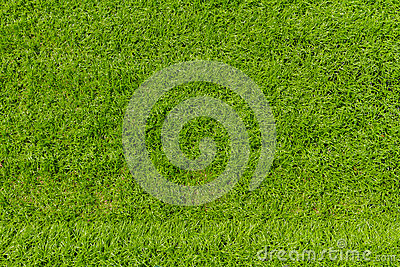 Artificial grass texture for background