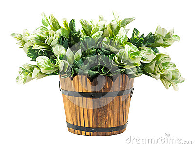 Artificial green branches in wood bucket