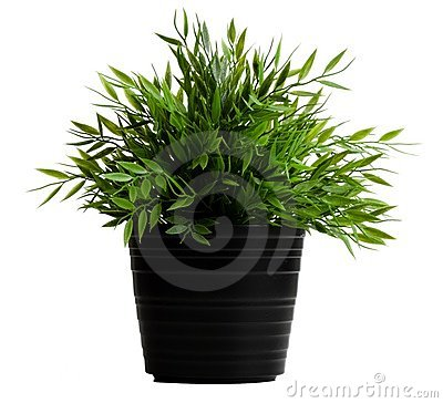 Free Artificial Plant In A Black Pot Stock Photos - 4660673