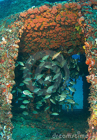 Artificial Reef-Ancient Mariner