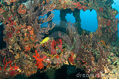 Artificial Reef named the Berry Patch