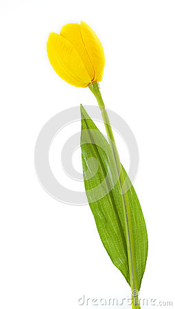 Artificial Tulip