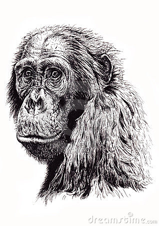 Artistic sketch of ape