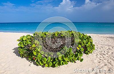 Aruba, With Love