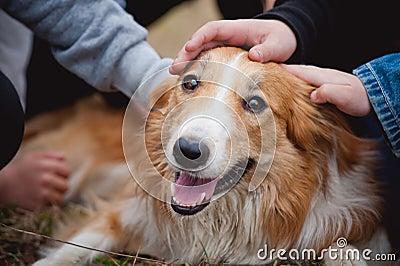 As crianças acariciam o cão vermelho do collie de beira