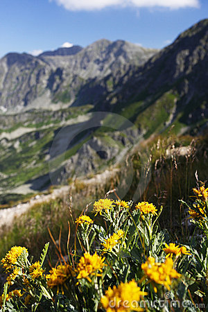 As Flores Com Montanhas