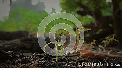 As mãos da mulher que plantam as sementes na terra moeram e molharam com som ambiental da natureza filme
