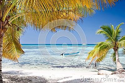 As palmas verdes na areia branca encalham sob o céu azul