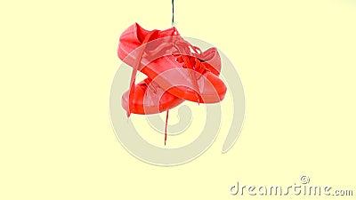 As sapatilhas coloridas brilhantes de suspens?o caem pena e cair Instrutores na moda da mulher da forma Plimsole ? moda do modern filme