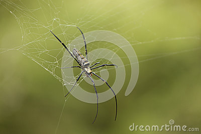 Ascendente próximo da aranha