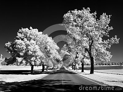 Ash lane in infrared
