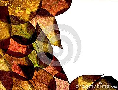 Ash leaf border