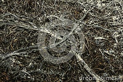 Ash of plants texture