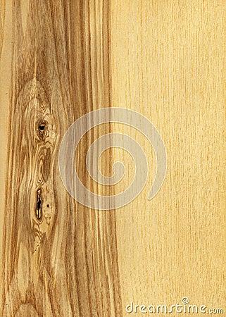 Ash tree (wood texture)