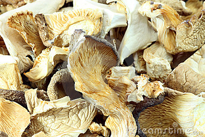Asia mushrooms