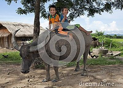 Asian children ride on water buffalo