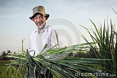 Asian farmer Editorial Stock Image