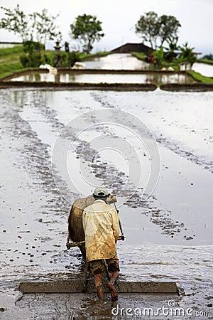 Asian farmer Editorial Photo