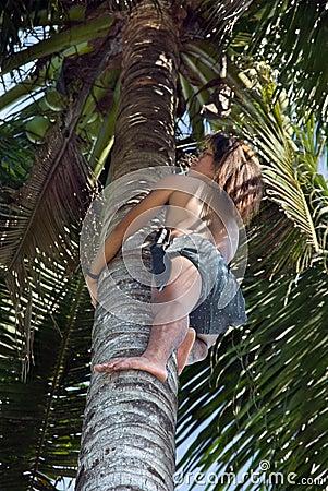 Asian native climbing palm tree