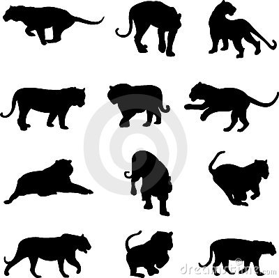 Free Asian Tiger And Jaguar Stock Image - 9408541