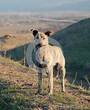 Asian wildlife dog
