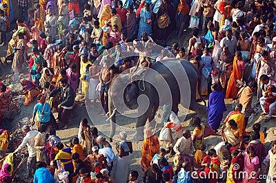 Asia's biggest cattle fair. Editorial Image