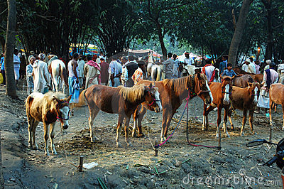Asia's biggest cattle fair. Editorial Photography
