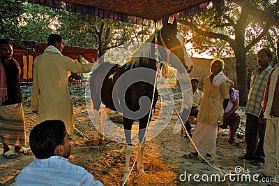 Asia's biggest cattle fair. Editorial Photo
