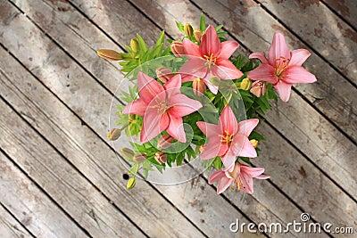 Asiatische Lilie