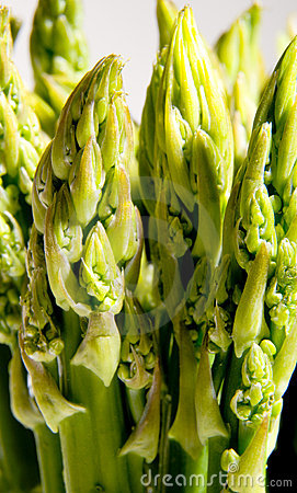 Free Asparagus Stock Images - 10013724
