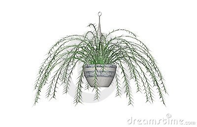 Asparagus fern drawing