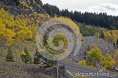 Aspen along Beartooth Highway