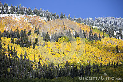 Aspen Grove after Snow