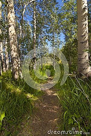 Aspen Hiking Trail