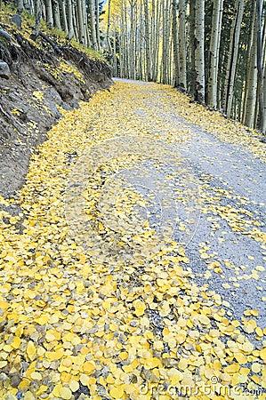 Aspen Leaf Litter