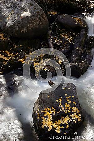Aspen leaves on shore in fall