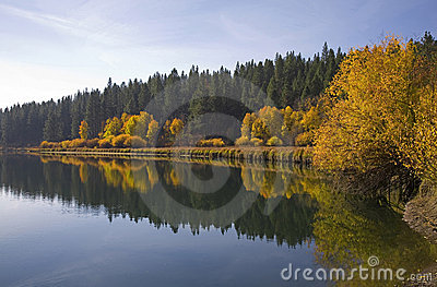 Aspen trees along a river in autumn