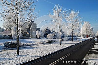 Asphalt road, trees snow and blue sky