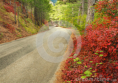 Asphalted mountain road through autumn forest