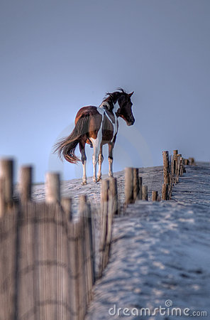 Free Assateague Island Wild Pony In HDR Stock Photography - 10120522