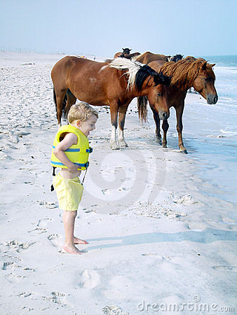 Free Assateague Ponies & Young Boy Stock Photography - 531422