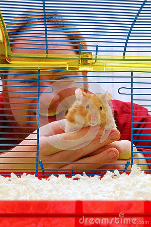Free Assignment File: Hamster Goes Home Stock Photography - 78088192
