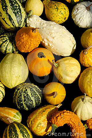 Free Assorted Gourds Stock Photos - 21255903